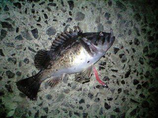 釣れる 釣れる! (5)