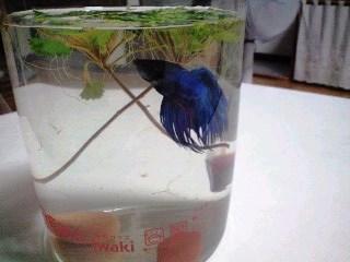 綺麗なブルー
