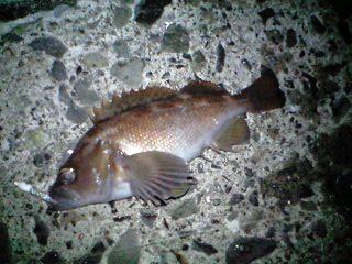 20101205 小樽