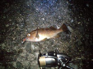 サンドは釣れる b (8)
