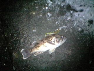 2011126 石狩 (1)