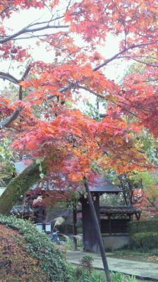 お寺の門と紅葉