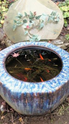 金魚と紅葉
