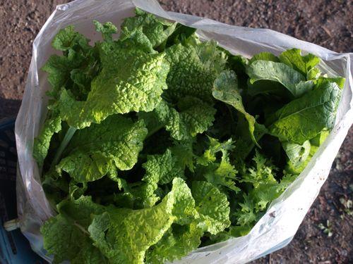2ピカピカの野菜たち