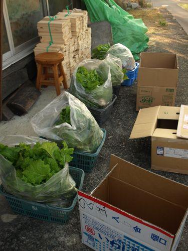 3出荷待ちの野菜達