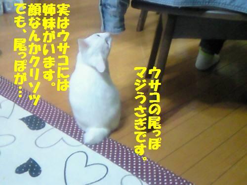 ウサコ091017_1