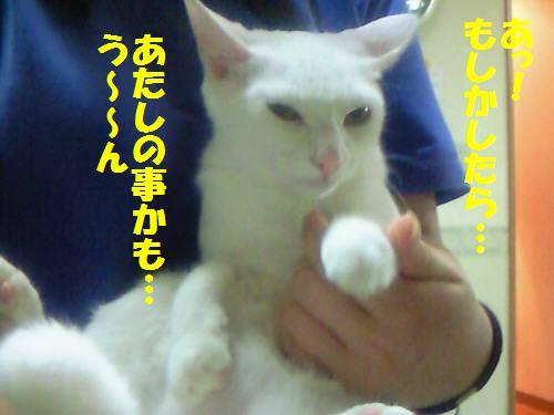 ツキコ091017_2