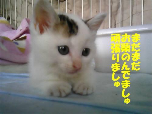 まる091018_1