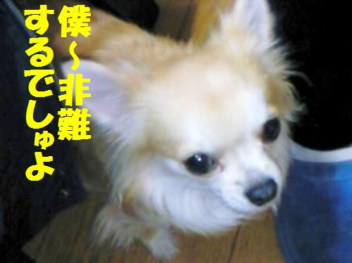 コタ091019_2