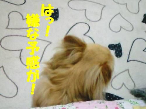 コタ091019_1