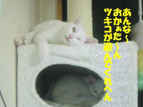 ウサコ091019_1