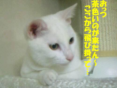 ウサコ091019_2
