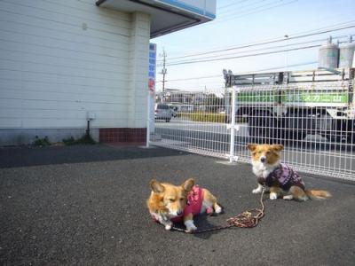 28日昼散歩10