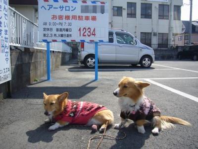 28日昼散歩7