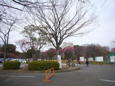 7日大宮第二公園1