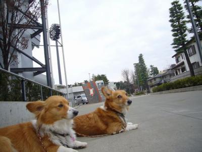 7日大宮公園6