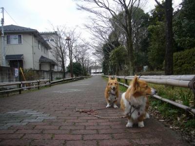 7日大宮公園7