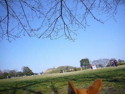 27日古墳公園9