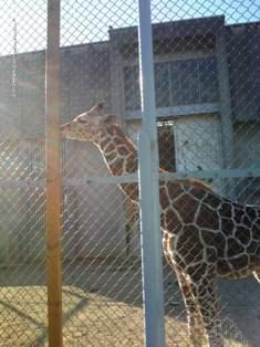 20091202  初めての動物園 015