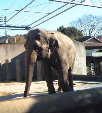 20091202  初めての動物園 010