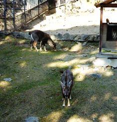 20091202  初めての動物園 013