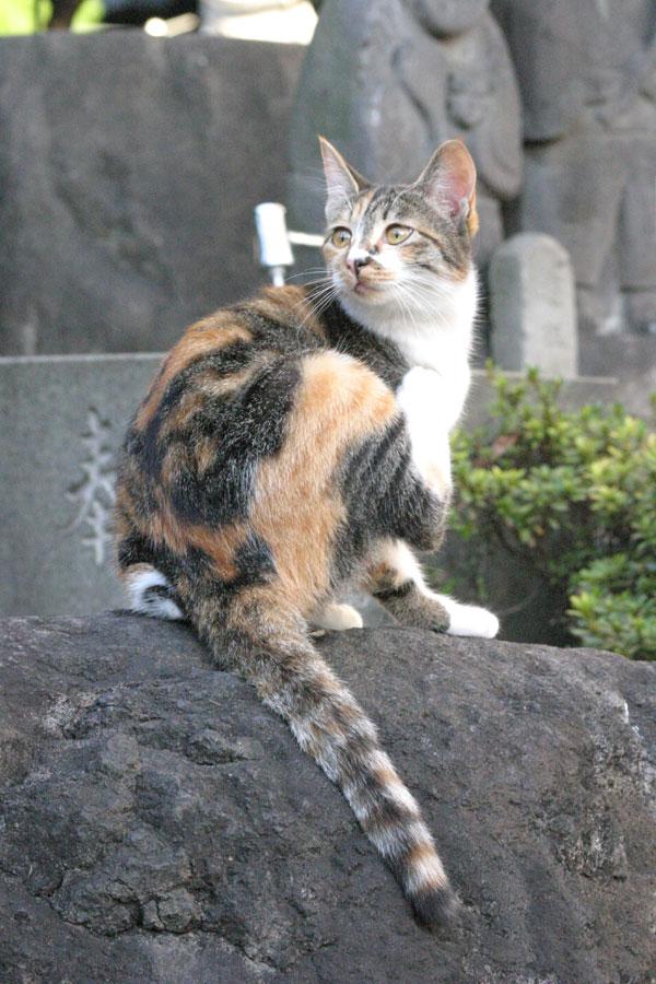 池袋のネコ