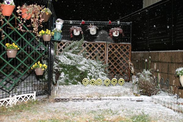 埼玉に雪が降るぅ