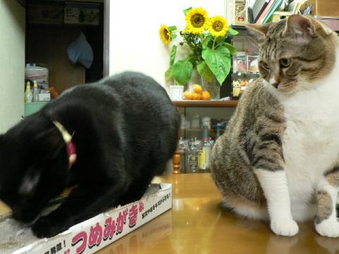 <br />きなっちゃん社長&ささっちゃん部長