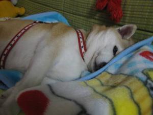 眠いんじゃ