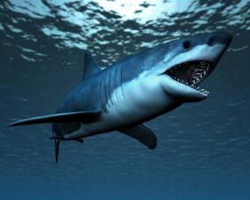 Great White and Megalodon