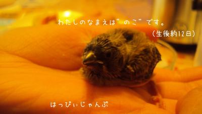 ブログ画像_convert_20120318212313