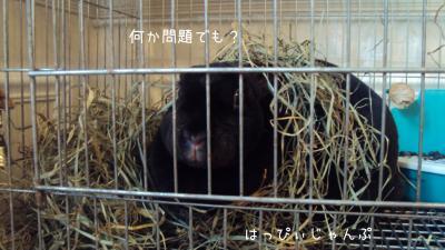 DSC01200_convert_20111219070717.jpg