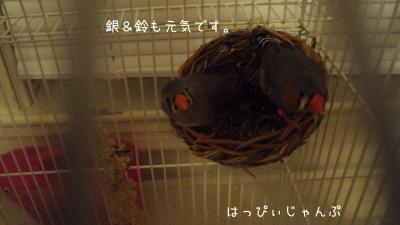 DSC01263_convert_20111224063304.jpg