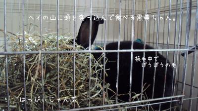 DSC02175_convert_20120131040913.jpg