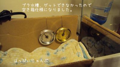 DSC02538_convert_20120208070632.jpg