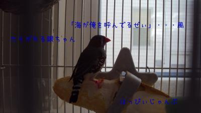 DSC02637_convert_20120210061457.jpg