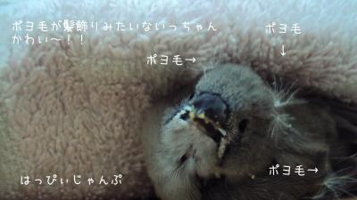 DSC03001_convert_20120218092910.jpg