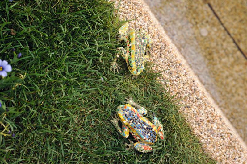 カラフル蛙