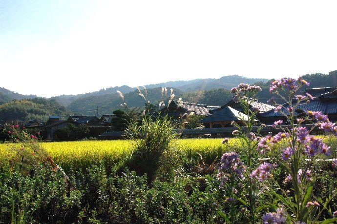 山本町「ちょうさ」秋祭り 159