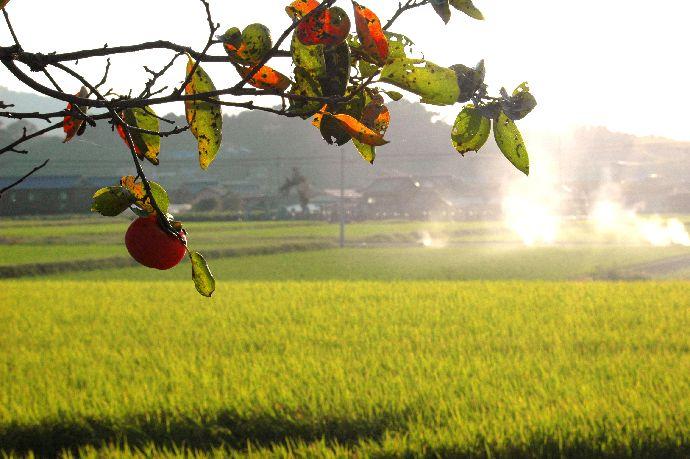 山本町「ちょうさ」秋祭り 173
