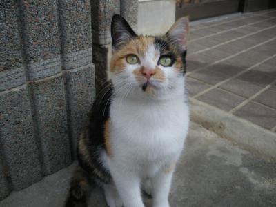 ミーちゃん1