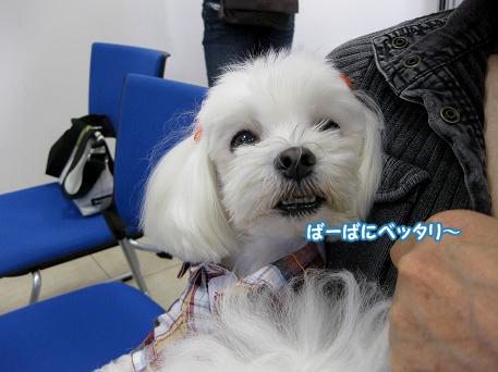 20091010-065.jpg