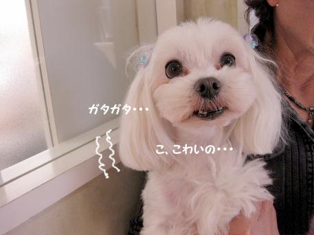 20091013-003_20091017223756.jpg