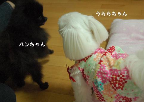 20110522-114.jpg