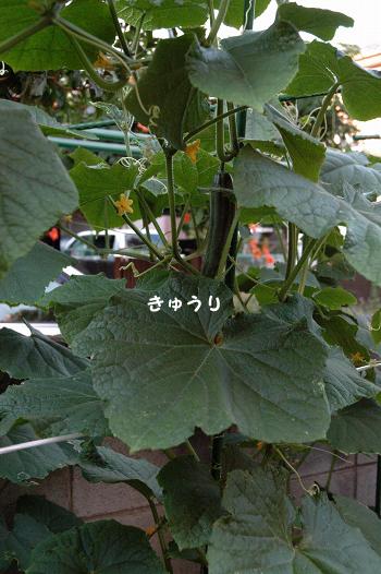 20110714y-002.jpg