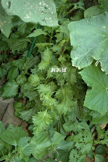 20110714y-005.jpg
