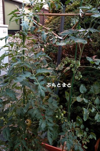 20110714y-015.jpg
