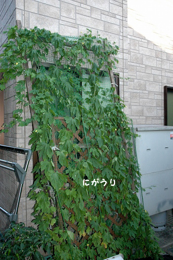 20110714y-017.jpg