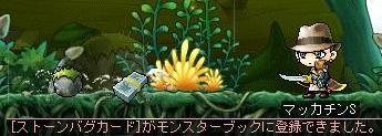 Maple07789a.jpg