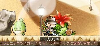 Maple7796a.jpg